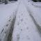 hazafelé a hóban