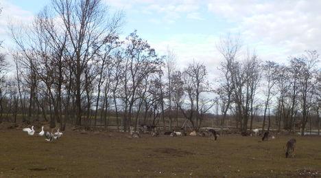 Püski, Állatok a kavicsbánya melletti területen, 2012. január 07.-én