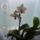 Ági orchideái