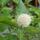 Fenyvesiné Sz. Éva Dézsás növények