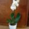 Lepkeorchidea 5