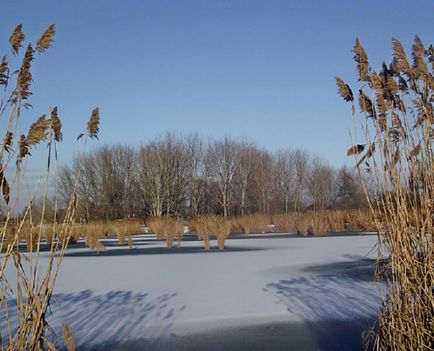 5.Bújtosi tó