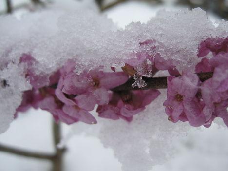 Tavasz a télben /Tél a tavaszban?