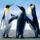 Pingvinek-001_1355548_2731_t