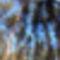 Égig Érő Erdő