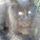 Kuza_pihen-001_1356056_2196_t