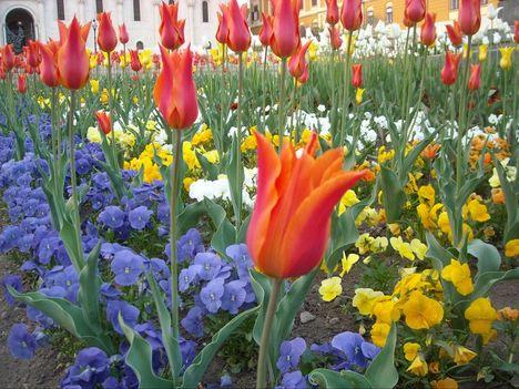 Virágok, melyek Isten dicsőségét hírdetik 1