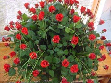Virágok, melyek Isten dicsőségét hírdetik 3