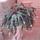 Bimbos_karacsonyi_kaktusz_1305214_7079_t