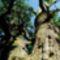 Ezeréves fa