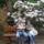 Jeli_arboretum_1350701_7855_t