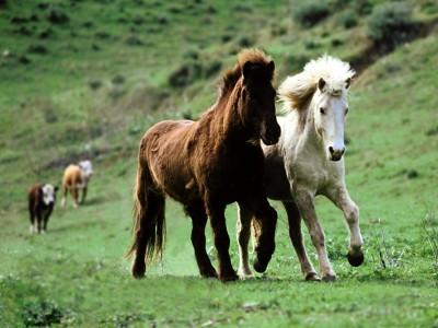 lovas kép 11