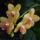 Wolf Márti orchideái