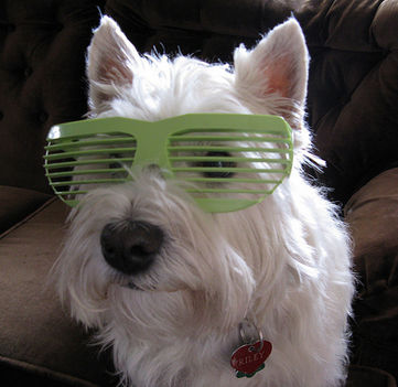 Zöld fehér szemüvegen keresztül.