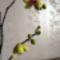 DSC06497; Phalaenopsis