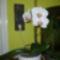 Újra virágzó orchidea