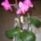 Újra virágzó orhidea