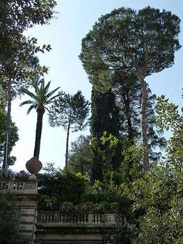 pálma és pineák - róma