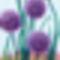 Hagyma virágok
