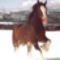 clydesdale 15