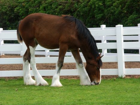 clydesdale 26