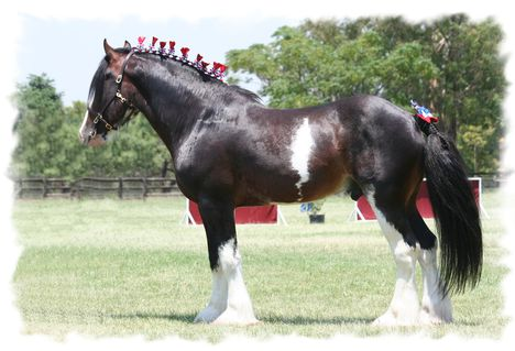 clydesdale 27