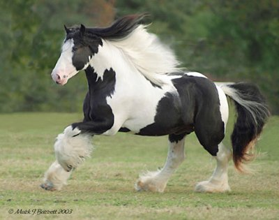 clydesdale 28