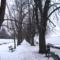 Gesztenyefa sor a Dunánál 2