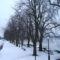 Gesztenyrfa sor Duna partján