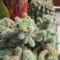 kaktuszom