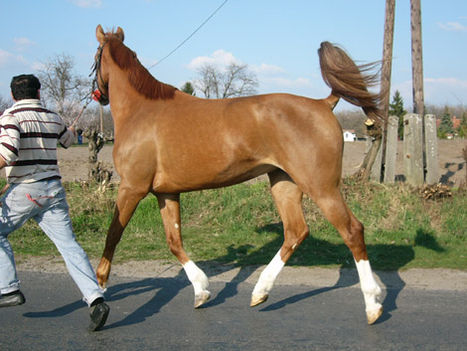 lovas kép 13