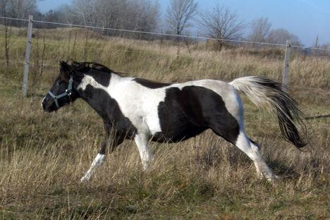 lovas kép 4