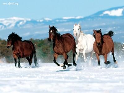 lovas kép 7