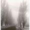 régi utcakép az öreg jegenyesorral