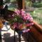 rózsaszin kaktusz