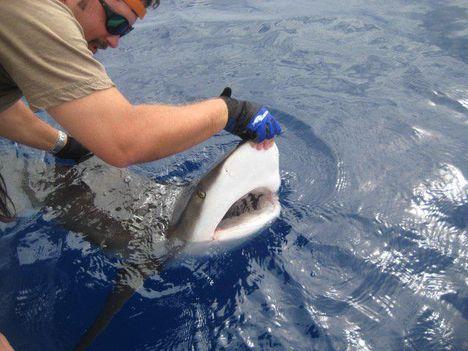 tengeri horgászat_1479136852_n