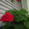 virágoskertem 10