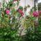 virágoskertem 11