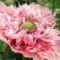 virágoskertem 12