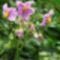 virágoskertem 1