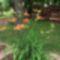 virágoskertem 2