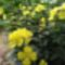 virágoskertem 4