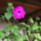 virágoskertem 5