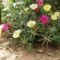 virágoskertem 9