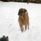Zeusz a hóban.