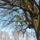 Söcényházy Csilla - Tél a Pilisben