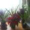 Fénykép 0259 virágok vegyesen