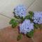 képek virágok 006