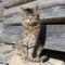 A  szomszéd napozó cicája KORNÉLIÁNAK!
