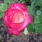 Anyu virágai 004